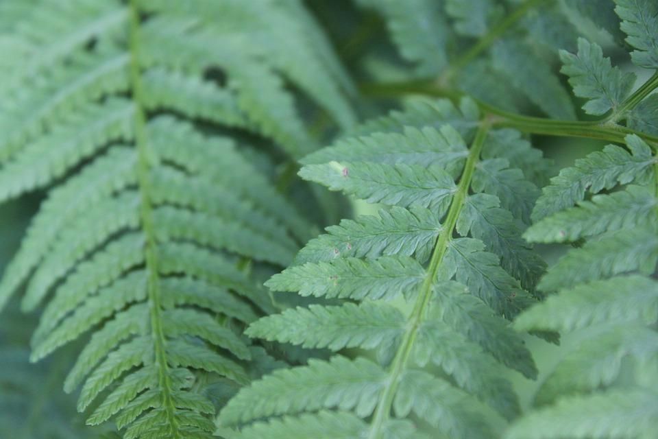 Green, Ferns, Leaves