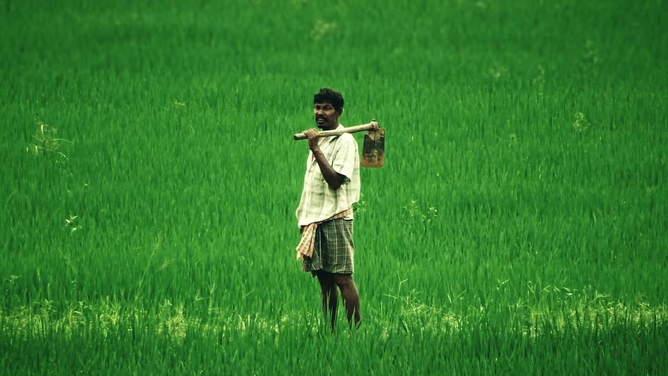 Farmer, Farm, Man, Standing, Crop, Green Field