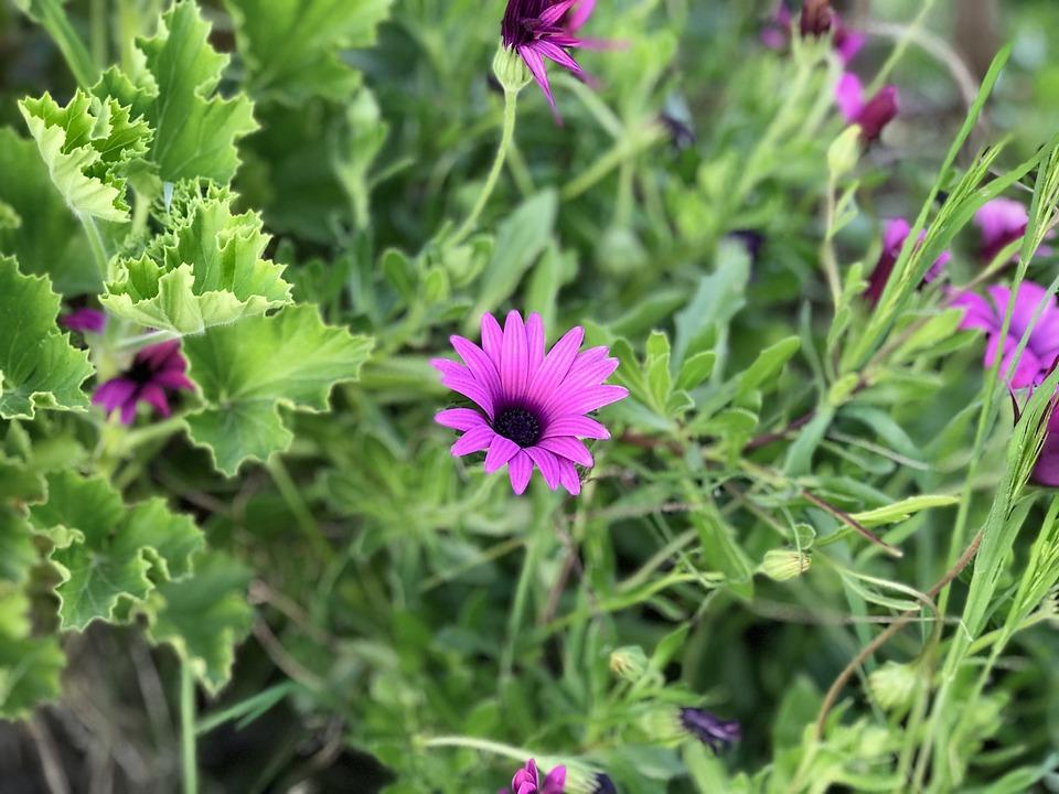 Flower, Nature, Plant, Summer, Garden, Spring, Green
