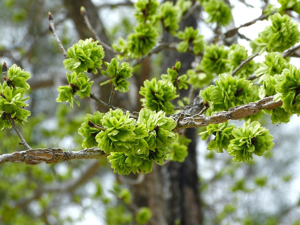 Green Flower, Green, Bloom, Garden, Branches, Forest