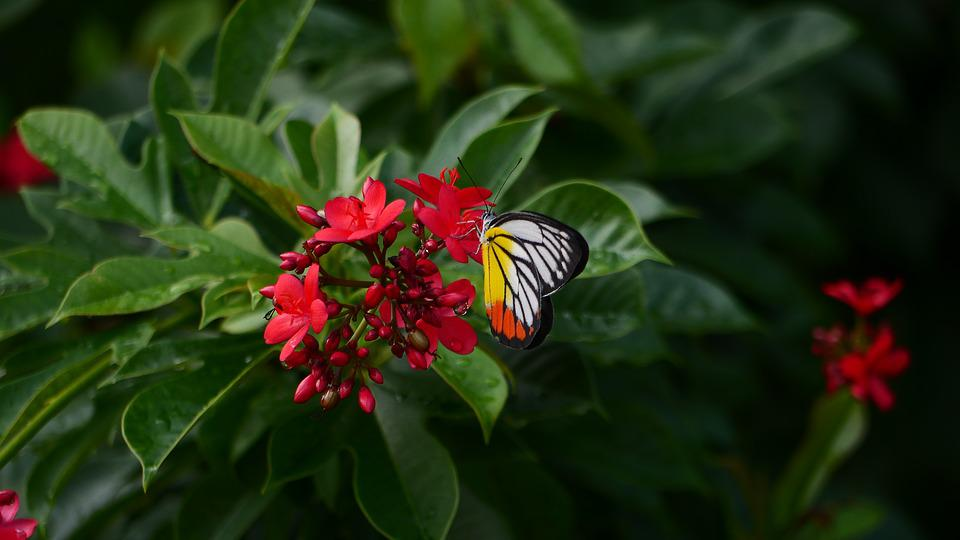 Red, Flower, Butterfly, Forest, Green, Leaves