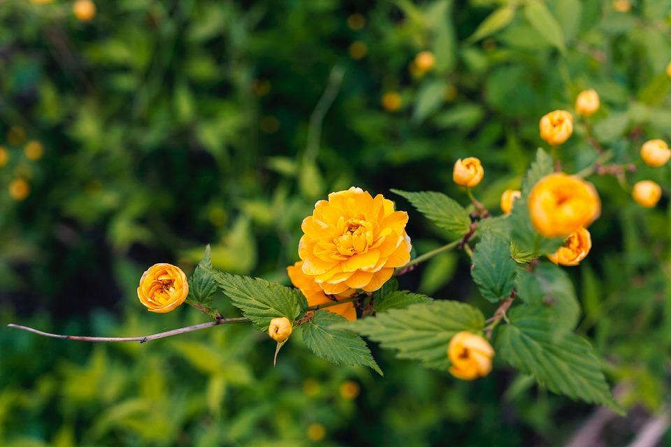 Flower, Flowers, Yellow, Green, Petal