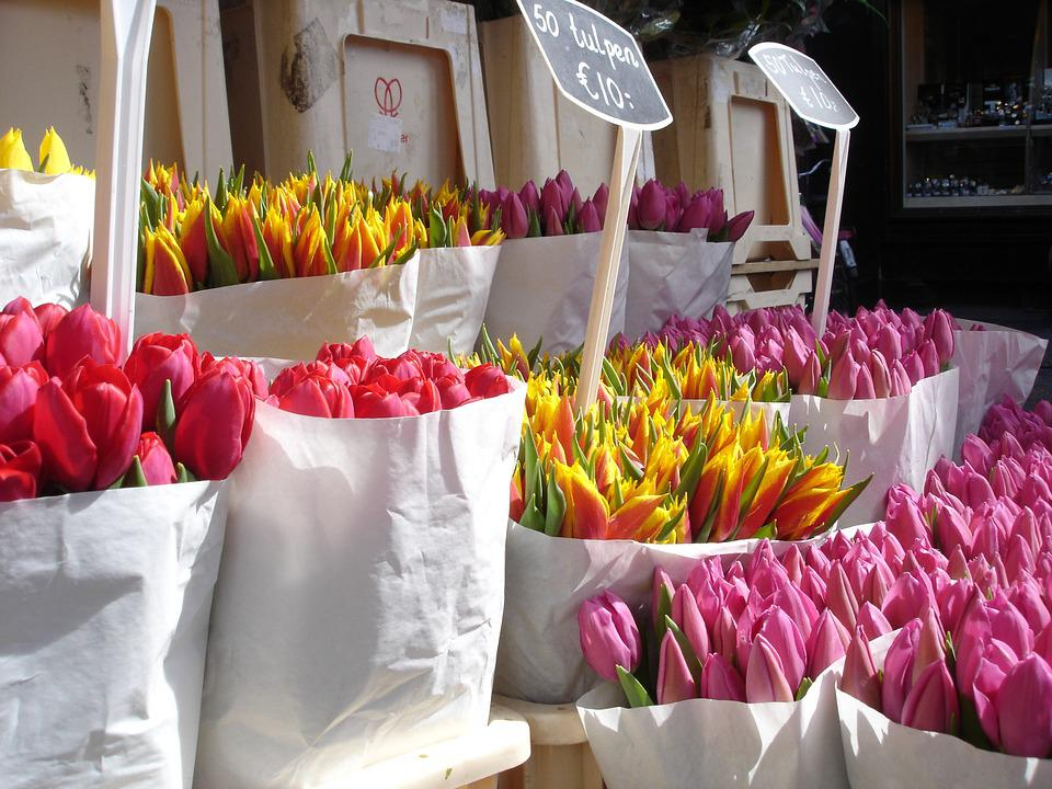 Tulips, Flowers, Valentines, Spring, Floral, Green