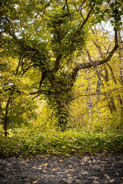 Tree, Overgrown, Forest, Moss, Green, Autumn, Baustamm