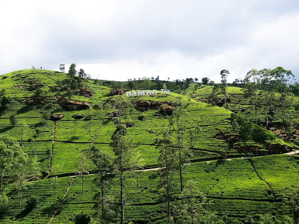Green, Nature, Srilanka, Forest, Damro, Landscape