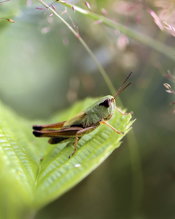 Insect, Grasshopper, Forest, Green, Macro, Summer, Leaf