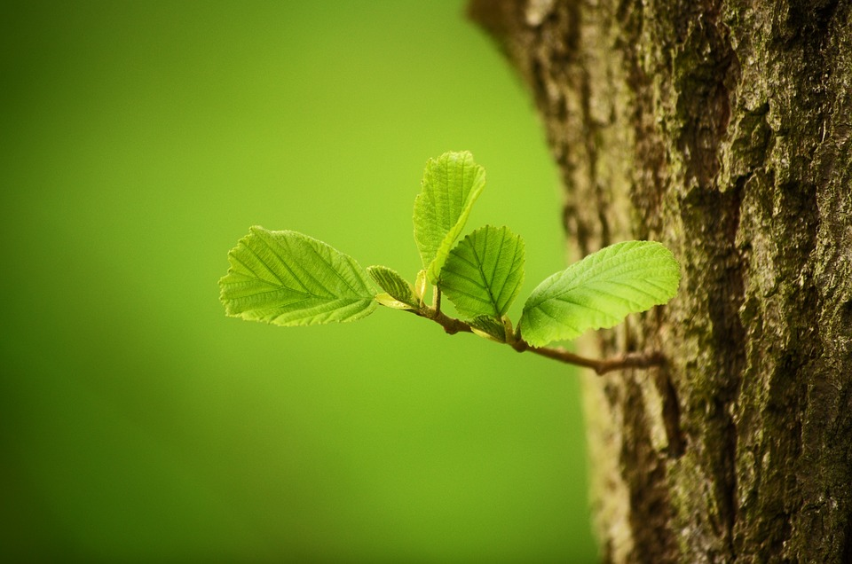 Trees, Leaves, Leaf, Nature, Green, Forest, Macro