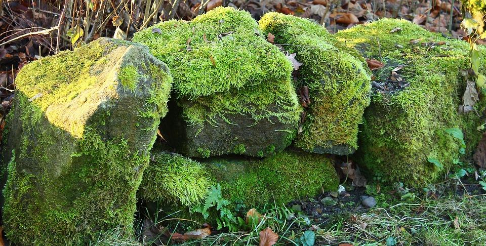 Stone, Wall, Green, Fouling, Nature, Stone Wall, Moss