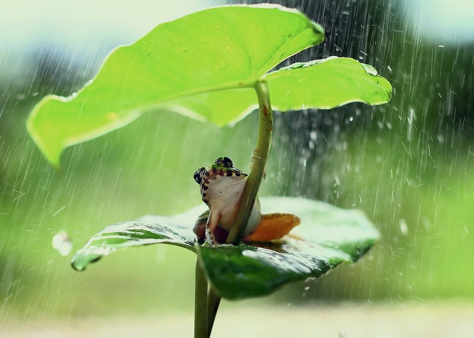 Frog, Green, Leaf