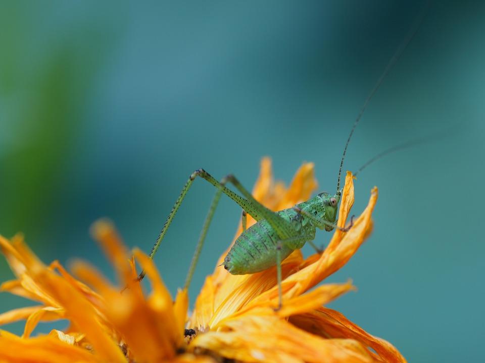Garden, Grasshopper, Flowers, Orange, Insect, Green