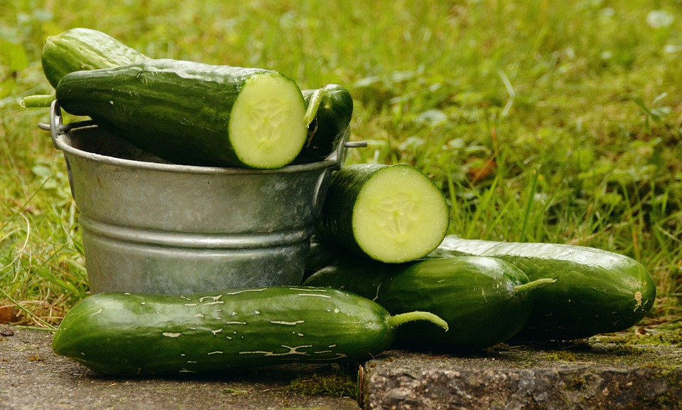 Cucumbers, Garden, Harvest, Vegetable Growing, Green