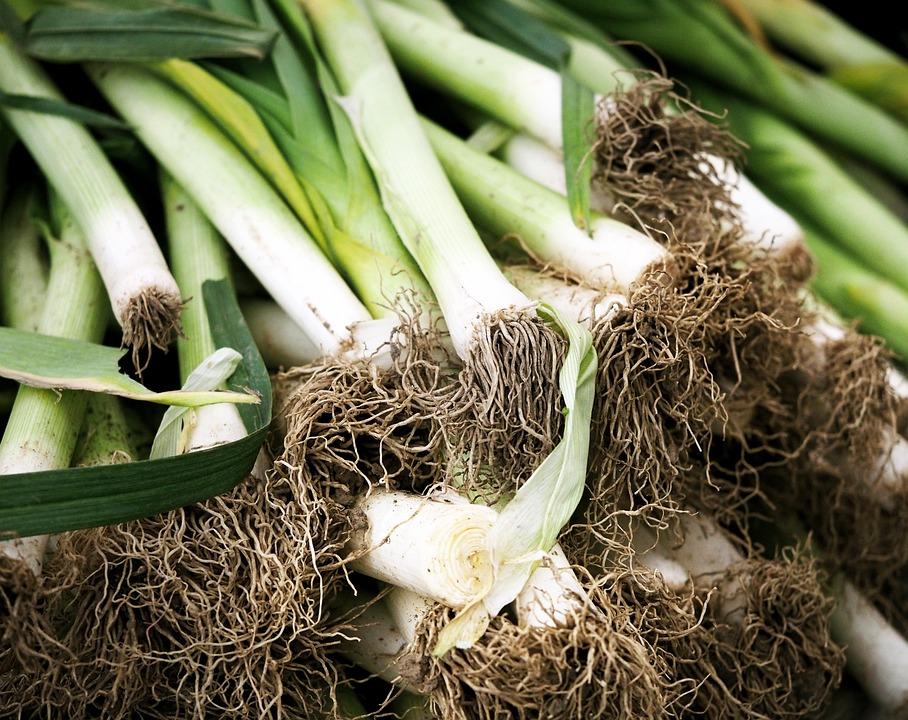 Leeks, Green, Roots, Garden, Food, Vegetable, Healthy