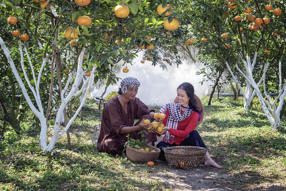 Garden, Nature, Vietnam, Green, Scenery, Love