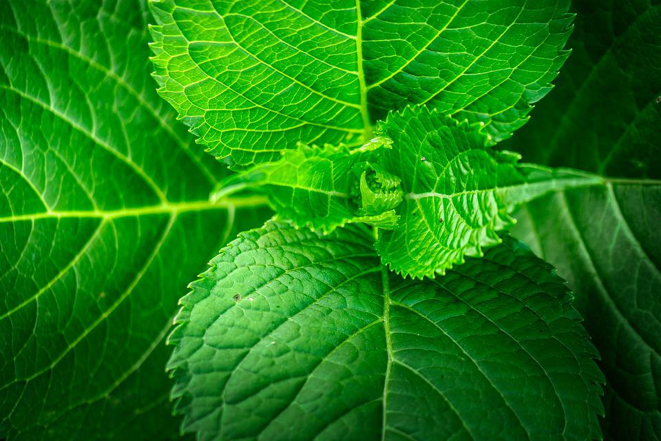 Leaf, Grain, Structure, Green, Vessels, Veins