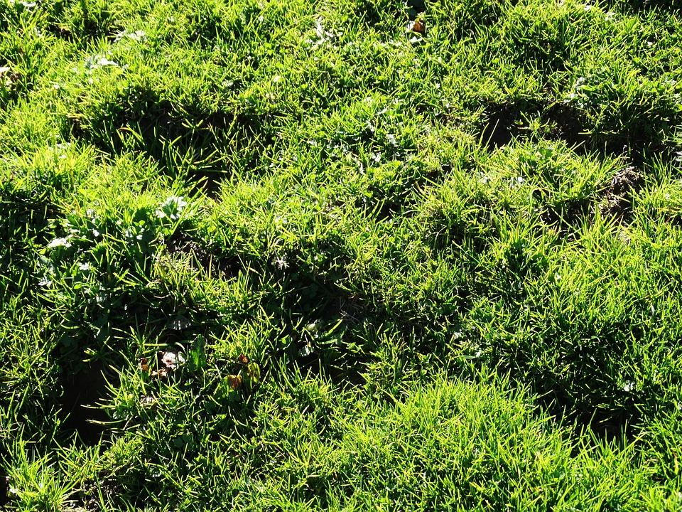 Grass, Meadow, Alpine Meadow, Juicy Green, Green, Juicy