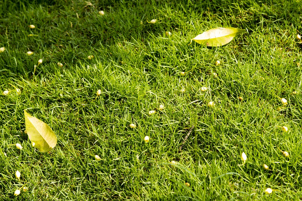 Lawn, Green Grass, Green Lawn Grass, Leaves On Lawn