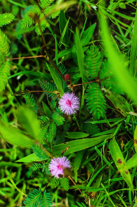 Grass, Weed, Plant, Nature, Green, Harvest, Marijuana