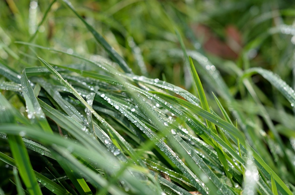 Grass, Green, Dew, Wassertrofpen, Nature, Drip, Macro