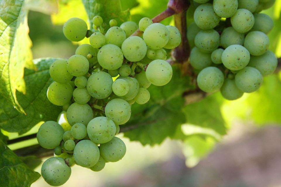 Grapes, Green Grapes, Nature, Green, Fruit, Berries