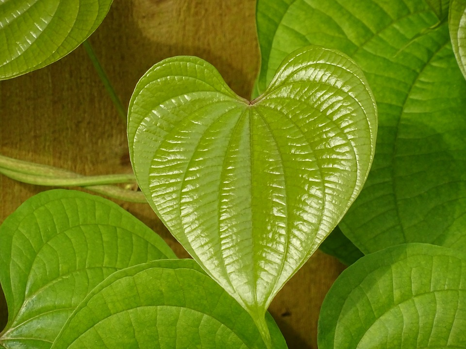 Leaf, Green, Heart, Green Leaf, Nature, Design