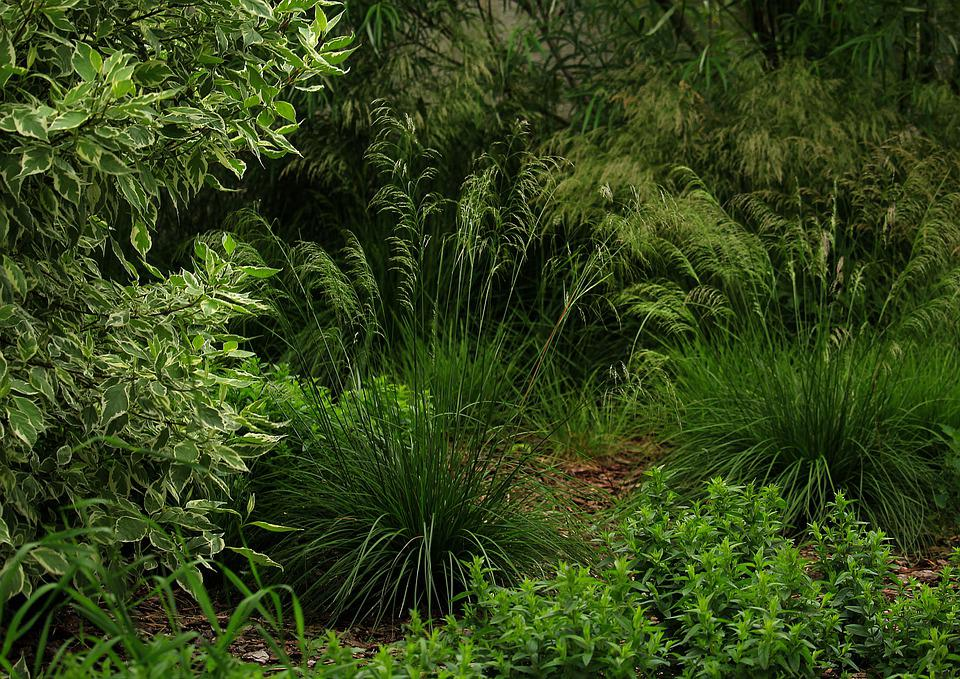 Herbs, Park, Grass, In The Summer Of, Nature, Green
