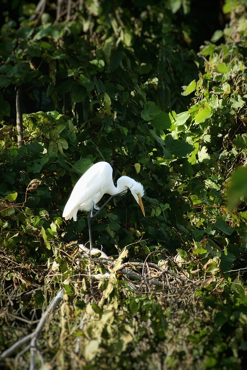 Animal, Forest, Wood, Green, Wild Birds, Heron, Egret