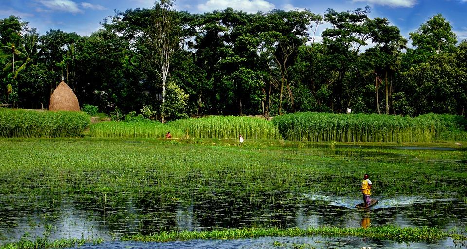 Bangladesh, Lake, Boat, Green Boat, Green Lake