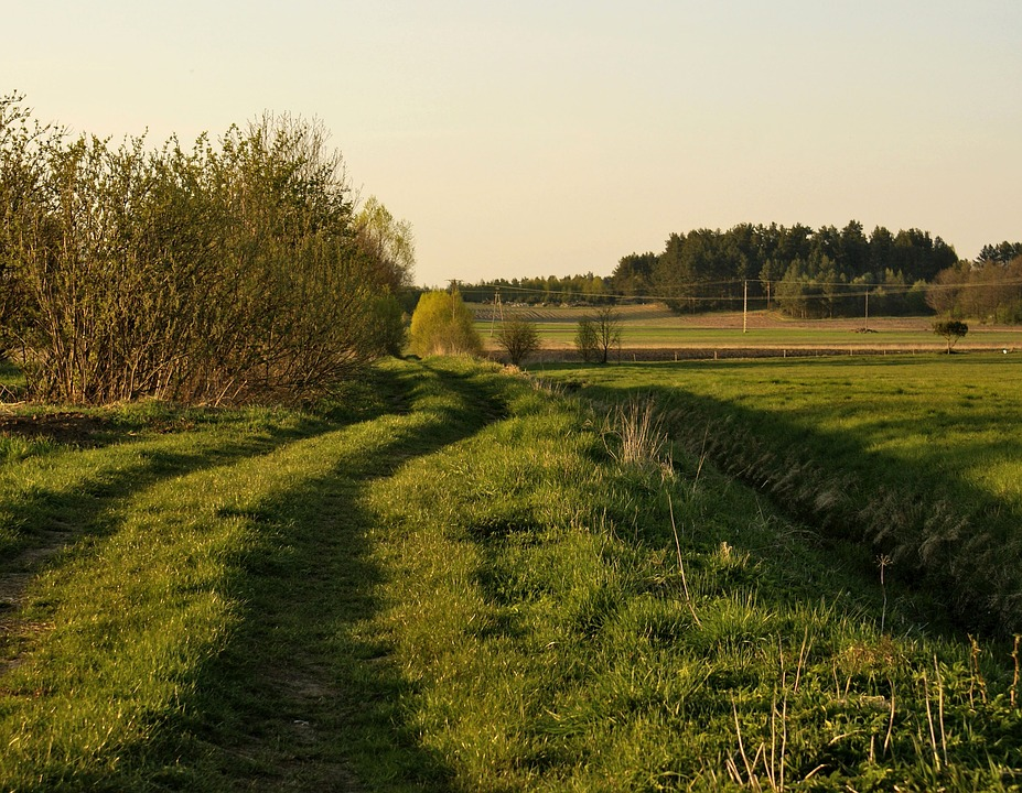 Lane, Meadow, Field, Village, Green, Nature, Landscape