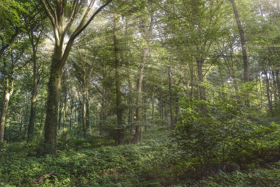 Forest, Nature, Landscape, Trees, Secret, Green, Hiking