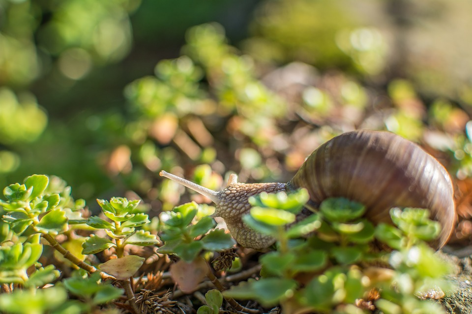 Snail, Green, Shell, Nature, Leaf, Slowly, Animal