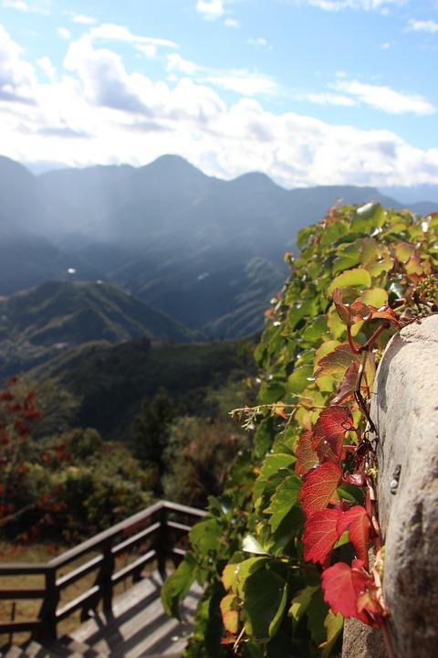 Blue Sky, White Cloud, Green Leaf, Native Plantstake