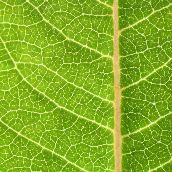 Closeup, Eco, Fresh, Green, Green Leaf, Leaf, Nature