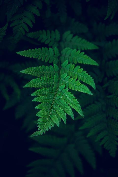 Leaf, Nature, Forest, Autumn, Natural, Plant, Green