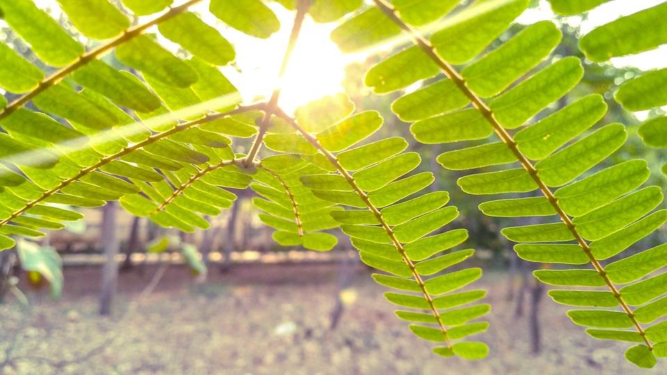 Leaves, Tree, Green, Leaf, Nature, Natural, Light