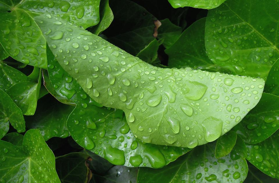 Foliage, Green Leaf, Raindrop, Just Add Water