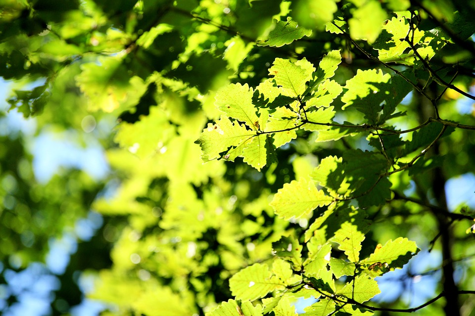 The Scenery, China, Green Leaf, Tree, Section, Summer