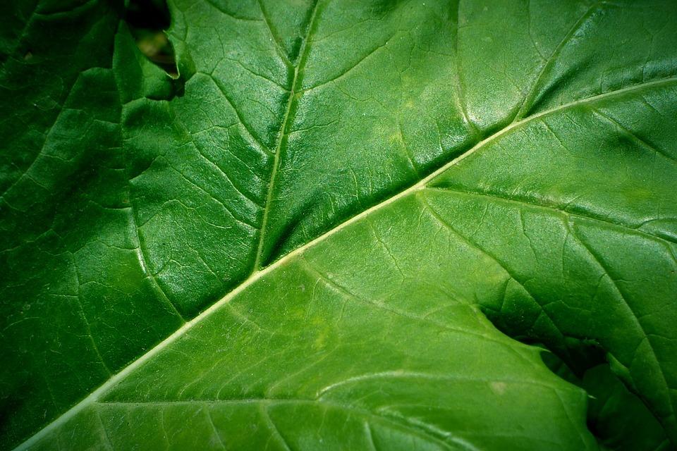 Leaf, Green Leaf, Green, Nature, Plant, Veins
