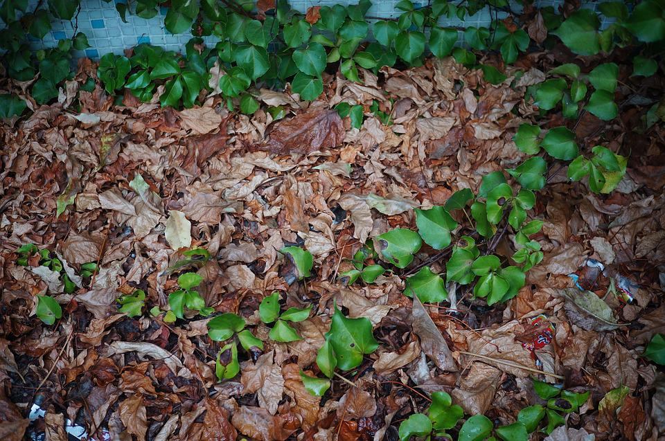 Autumn, Green Leaf, Dead Leaves, Wither