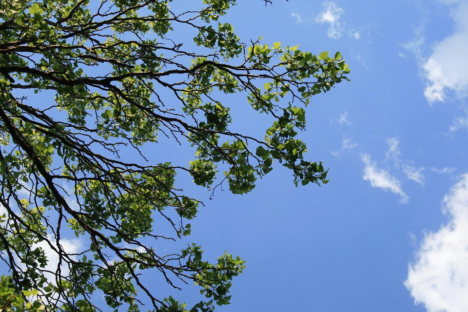 Branches, Trees, Foliage, Leaves, Clumped, Green, Sky
