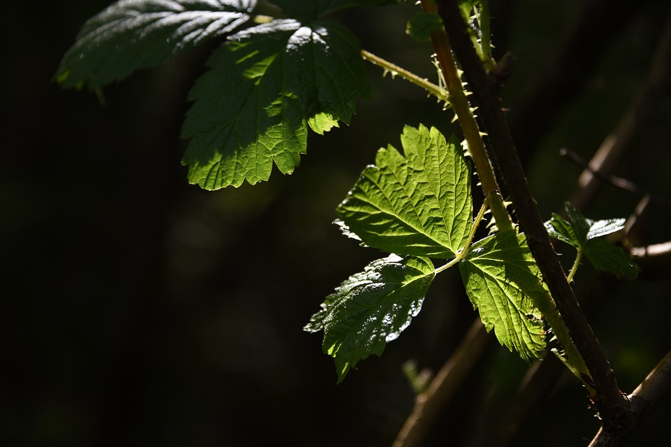 Leaf, Green, Sunlit, Green Leaf, Green Leaves, Nature