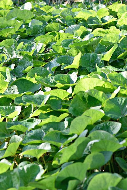 Foliage, Leaves, Green, Nature, Colorful, Mood, Color
