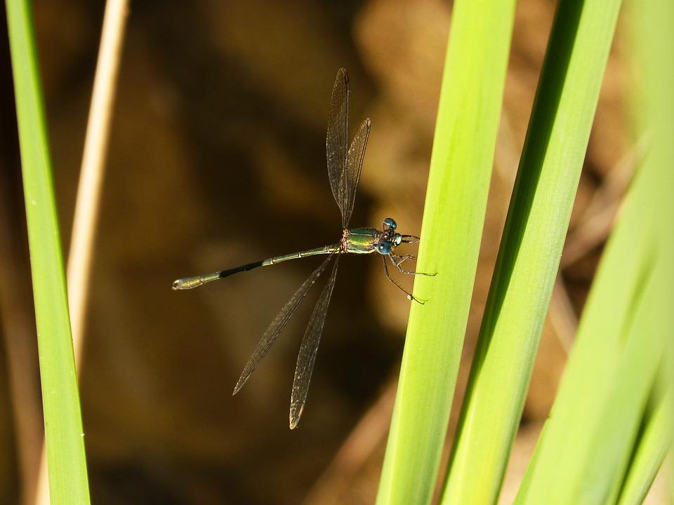 Dragonfly, Green, Leaf, River, Green Leaves