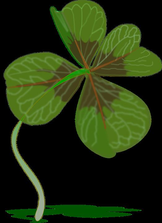 Clover, Plant, Luck, Green
