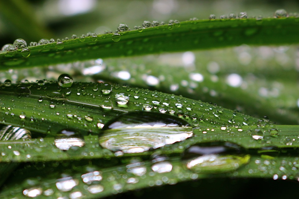 Raindrops, Transparency, Green, Nature, Macro, Leaf