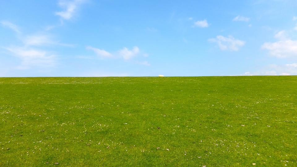 Meadow, Sky, Sheep, Grass, Rural, Summer, Rest, Green