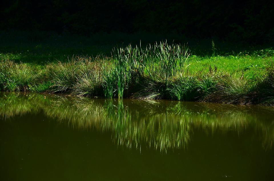 Grass, Meadow, Lake, Mirroring, Biotope, Nature, Green