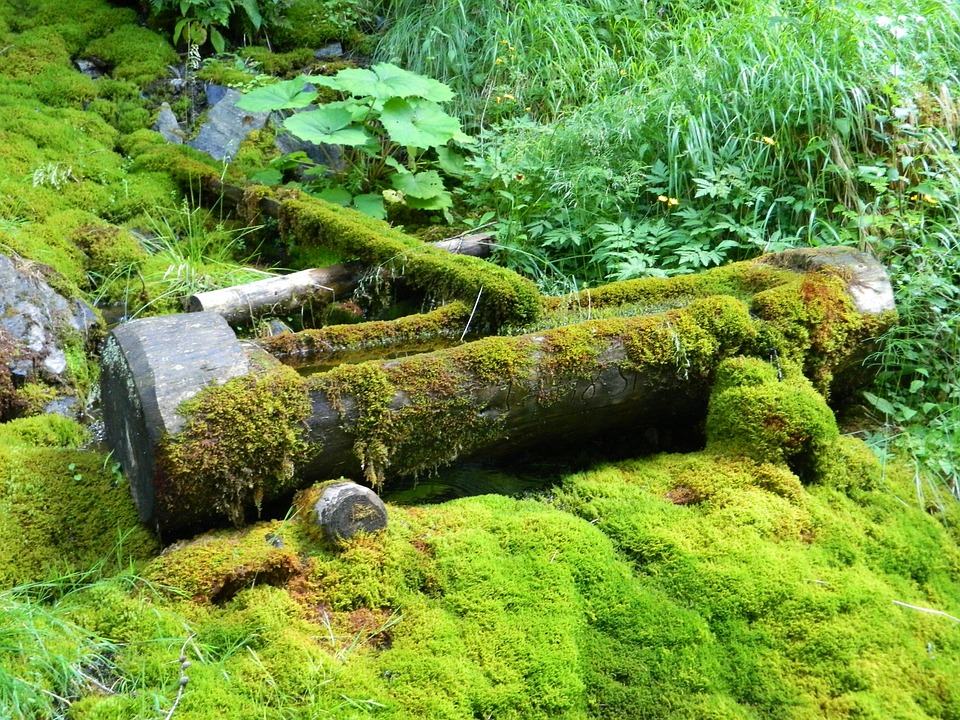 The Well, Water, Moss, Green