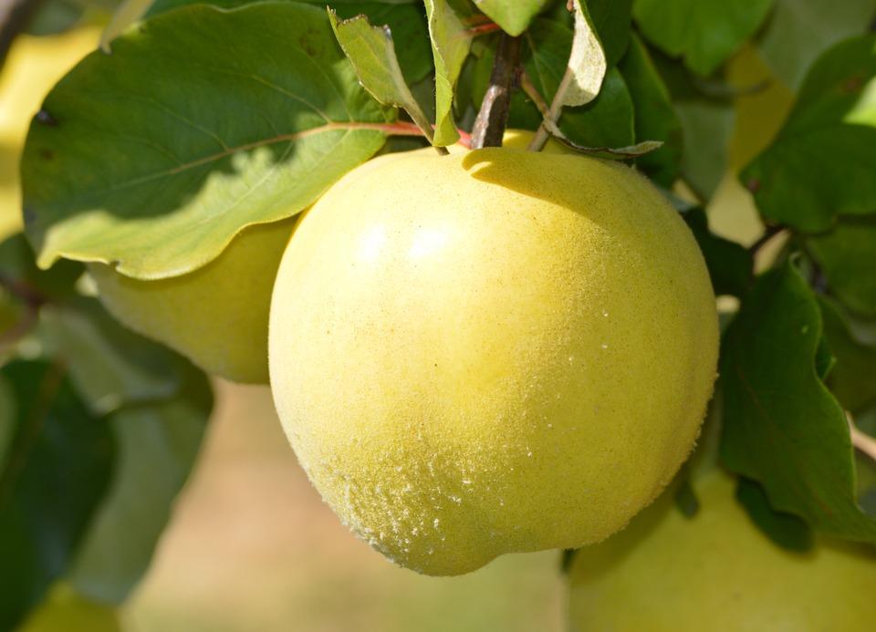 Nature, Green, Fruit, Croatia, Dalmatia, Natural