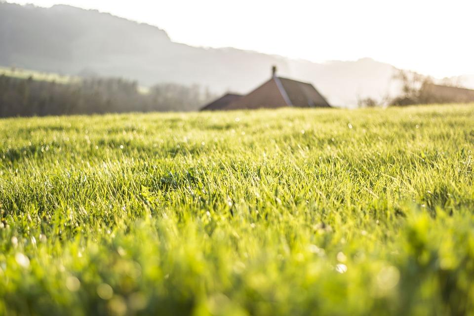 Spring, Grass, Green, Nature, Natural