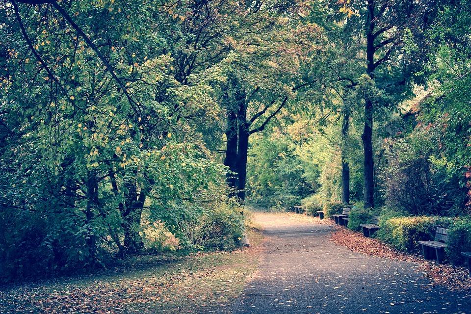 Avenue, Park, Nature, Away, Trees, Autumn, Green